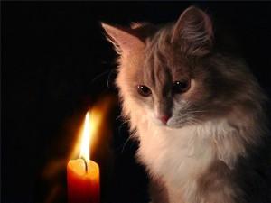 Судьба кошек в странах Востока