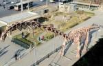 В Пекине покажут гигантского динозавра