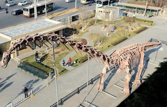 Скелет динозавра в Пекине