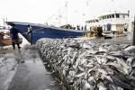 В Китае задержали 14 человек за контрабанду морепродуктов