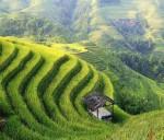 Китай подводит итоги уходящего года в сфере сельского хозяйства