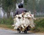 В Шанхае начинают работать птичьи рынки