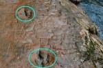 Отпечатки лап динозавров обнаружены в Китае