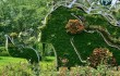Суйсеки, бонсай, необычные растения