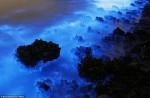 Берега моря в Китае засветились синим цветом