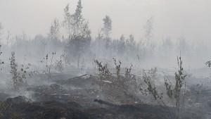Благовещенск страдает от китайских лесных пожаров