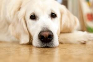 Брать ли с собой в Китай собаку