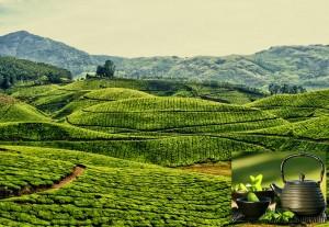 Чайные туры в Китай