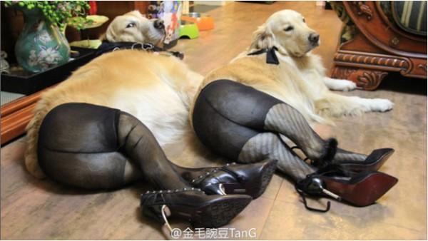 Что китайцы делают с женскими колготками1