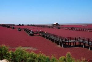 Чудо природы в Китае появился необычный пляж красного цвета
