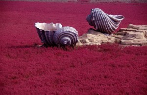Чудо природы в Китае появился необычный пляж красного цвета2
