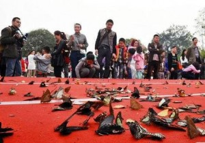 Дети в Китае во время шоу уничтожили более тысячи живых бабочек