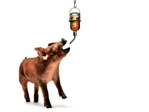 Экспорт в Китай виски из Великобритании превзошел экспорт свинины