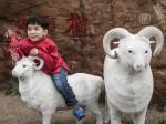 Фэншуй-эксперты: чего нужно ждать в 2015 году от Овцы