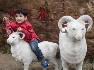 Фэншуй-эксперты чего нужно ждать в 2015 году от Овцы