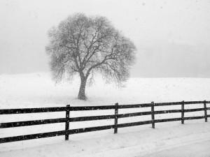 Холодная погода надвигается с севера Китая
