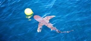 Игривая акула помешала учениям китайской армии
