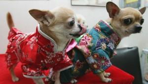Каких домашних животных держат китайцы
