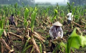 Китай и его сельское хозяйство