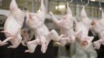Китай откажется от курятины из США