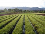 Китай планирует модернизацию африканской промышленности и сельского хозяйства