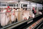 Китай принял решение разрешить поставки российской птицы