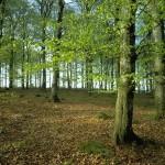 Китай тратит деньги на восстановление лесного покрова