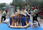 Китай уничтожил 662 кг нелегальной слоновой кости