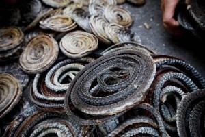 Китайская полиция конфисковала 6.5 тонн черепах и змей
