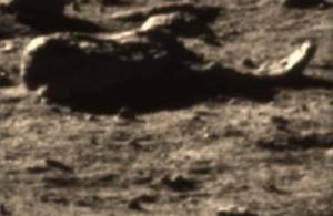 Китайские уфологи обнаружили на снимках Луны пришельца в маске