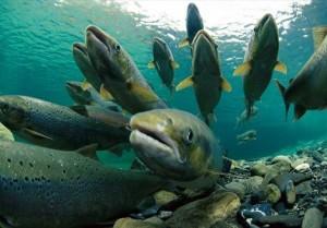 Китайцы будут ловить рыбу в Украине