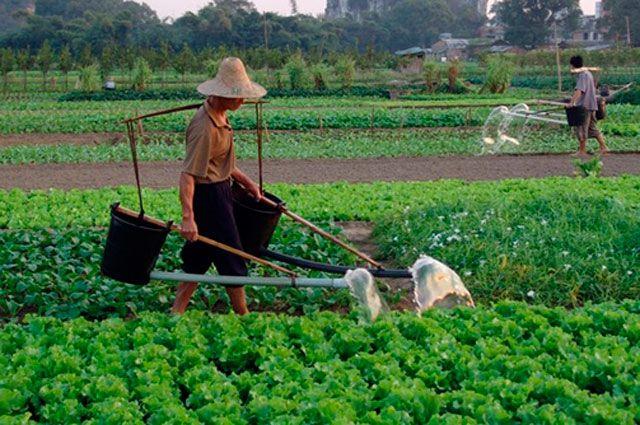 Китайцы сознались в подтасовке своих экономических показателей