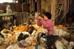 Китаянка проходит расстояние в 1,652 мили, чтобы спасти собак от ежегодного фестиваля собачьего мяса