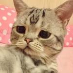 Кошка-пессимист стала новой звездой Инстаграм