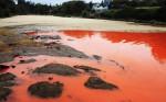 Красные приливы угрожают прибрежным городам Китая