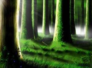 Лесные массивы в Китае