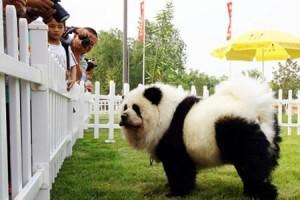 Мода на домашних животных в Китае