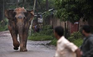 На юге КНР в одном из заповедников на людей напал слон