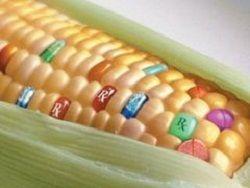 Партия трансгенной кукурузы вернулась из Китая в США