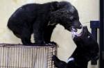 По ошибке китайский собаковод воспитал двух медведей