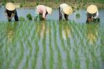 Развитие сельского хозяйства в Китае. Часть 2