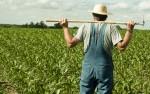 Аналитик: Рынок Китая покидают мелкие фермеры
