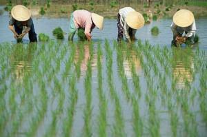 Сельское хозяйство в Китае2