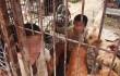 Старик в Китае держал своих внуков вместе с собаками в клетках