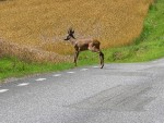 Туристы получили крупный штраф за преследование антилоп