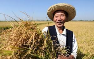 Условия хранения зерна в Китае будут в 2015 году улучшено