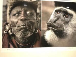 В КНР была закрыта выставка фотографа, который сравнил африканцев с дикими животными