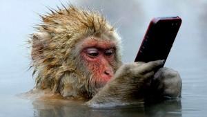 В КНР были созданы обезьяны с человеческими генами