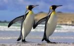 В КНР на свет появились близнецы-пингвины