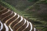 В КНР обновится система защиты растительного мира